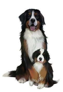 Bernese mountain dogs. Watercolor drawing