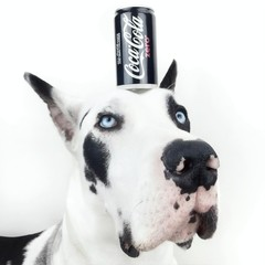 Coke zero on top of dogs head