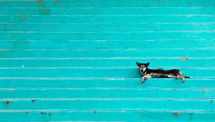 Lazy dog laying on colorful steps on the island of Roatan, Honduras.
