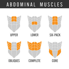Human Abdominal muscles overall in icon style. Illustration about bodybuilding.
