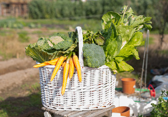 Basket of freshly picked vegetables
