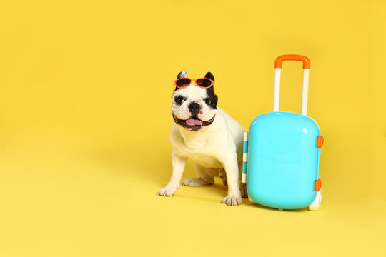 French bulldog with sunglasses and little suitcase on yellow background. Space for text