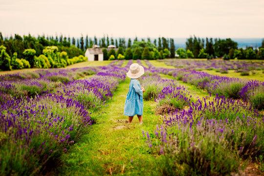 Child in a lavender field. Happy child in nature.