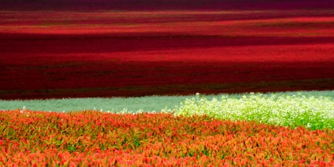 Abstract of red and white clover growing in the Willamette Valley.  A great example of the art of agriculture.