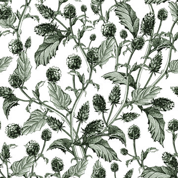 Psoralea herb seamless pattern from  flowers with leaves. Hand drawn bakuchiol,  organic healthy herb (natural retinol) with green ink, isolated on white background.