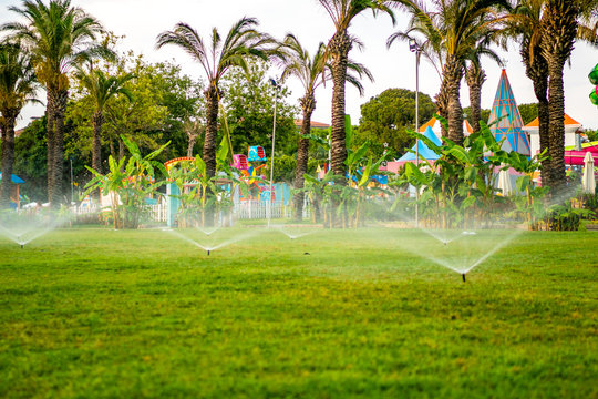 Lawn watering and irrigation system. Automatic sprinkler system on lawn and palm trees background