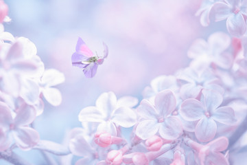 Papiers peints Lilac Beautiful spring purple lilac flowers blossom branch background with butterfly in sun light, macro. Soft focus nature background. Delicate pastel toned image. Nature closeup floral springtime.