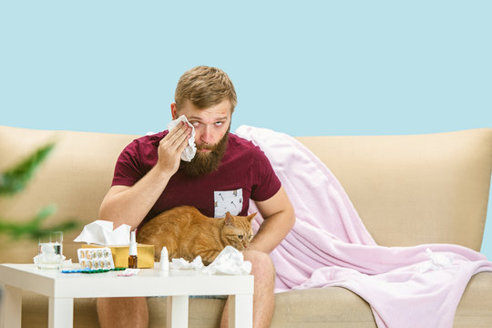 Young man suffering from allergy to cat hair. Having skin rash, itching, Sneezing in the napkin, sitting surrounded by used napkins, holding the pet. Taking medicine with no result. Healthcare concept