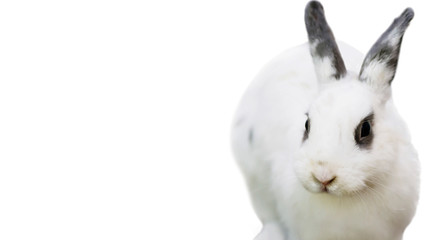 cute funny fluffy animal rabbit looks, background