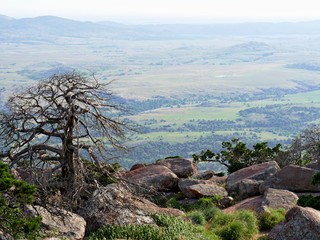Leafless tree surrounded by huge boulders at the peak of Mt. Scott, Oklahoma, USA.