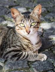 Portrait of a street cat on the streets of Itapissuma - Pernambuco, Brazil