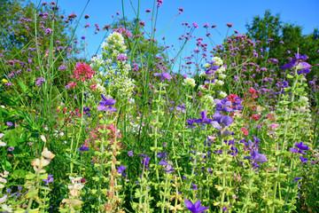 Wall Mural - bunte Blumenwiese im Sommer
