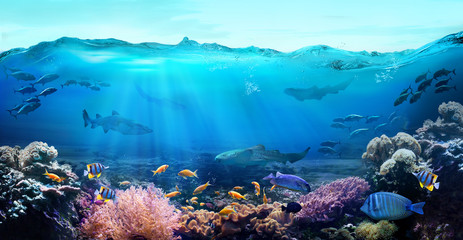 Poster Coral reefs Tropical coastal waters. Underwater view of the coral reef. Life in the ocean.