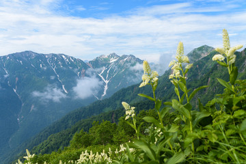 Keuken foto achterwand Alpen 山と高山植物