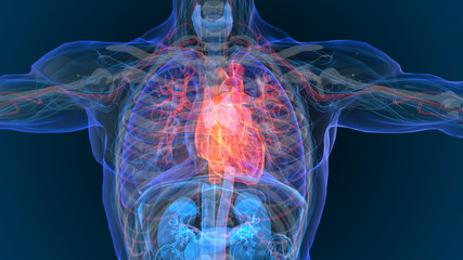 3d rendered illustration of  heart attack and heart disease 3D illustration