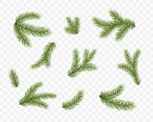 Fir branches isolated on transparent background. Pine, xmas evergreen plants elements. Vector Christmas tree green decoration set.