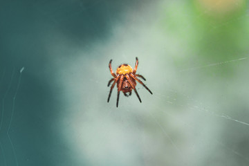 Macro picture of spider on a cobweb