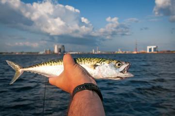 Summar sea fishing trophy - mackerell