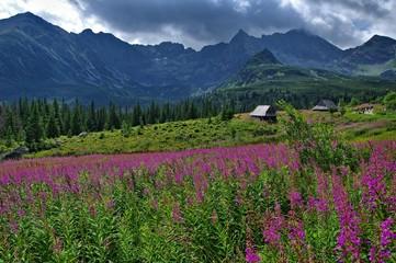 Fototapeten Gebirge Dolina Gąsienicowa Tatry Polskie