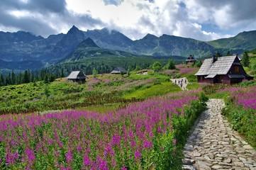 Dolina Gąsienicowa Tatry Polskie