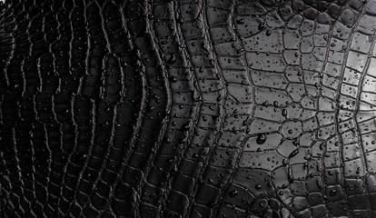 Fototapeten Crocodile black crocodile texture with raindrops
