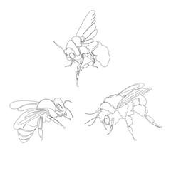 bee. one line. vector image of an insect. set of pictures continuous line