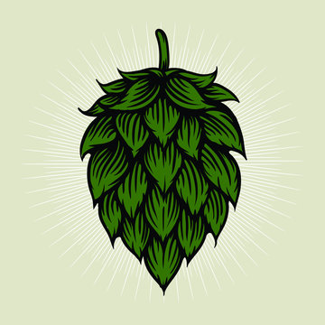 Beer hop illustration in engraving style. Design element for logo, label, emblem, sign, poster, label. Vector illustration