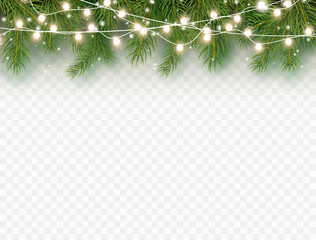 Border with green fir branches and lights isolated on transparent background. Pine, xmas evergreen plants banner. Vector Christmas tree and garland decoration.