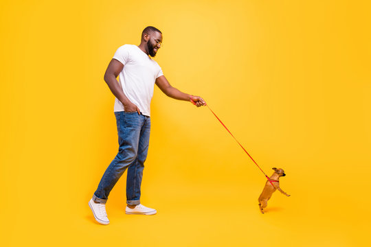 Full size photo of dark skin guy walking park with little dog in collar wear casual outfit isolated yellow background