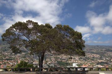 Miradouro Pico dos Barcelos - Madeira - Portugal