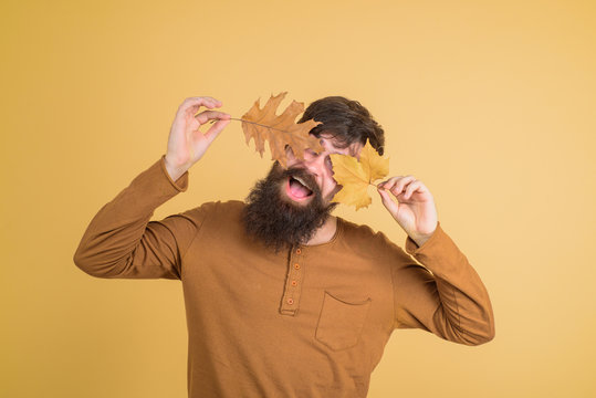 Autumn. Autumn mood. Happy bearded man covered eyes with autumn leaf. Autumn time. Man with yellow leaves in hand. Seasonal fashion. Autumnal clothing. Men fashion. Leaf fall. Male with golden leaf.