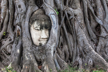 Buddha Head Embedded in a Banyan Tree