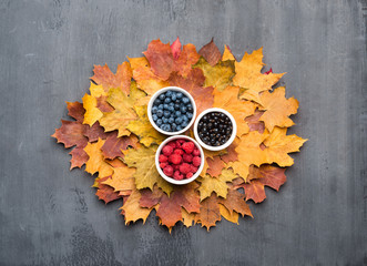 Wall Mural - Seasonal autumn background. Frame of colorful maple leaves and berries over grey