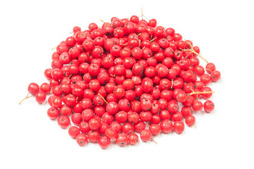 Heap of ripe red ashberry close up on white background