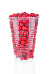 Ripe rowan berries in plastic cup close up on white background
