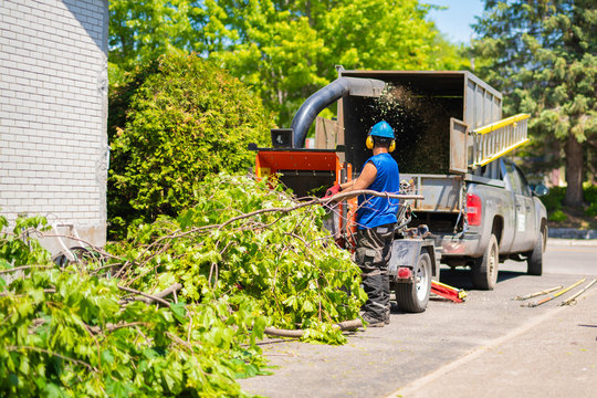 equipment and workers cut the branch under a shredder