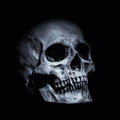 vampire skull on a black background