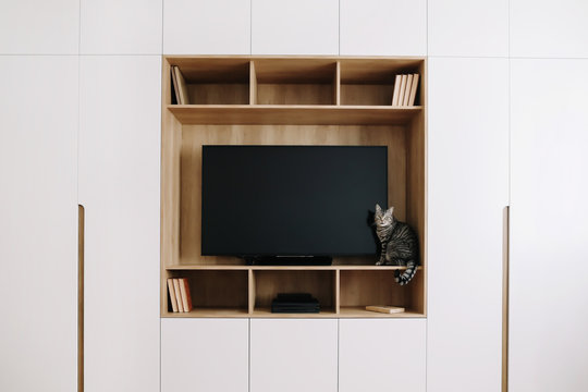 Cute cat in modern interior. Living room  with TV on wooden wall and a white wardrobe.  scandinavian style, minimal concept.