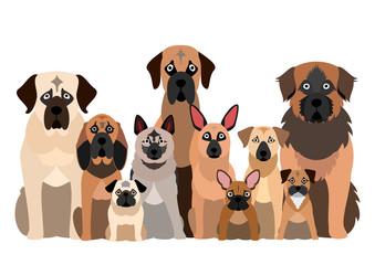 large group of black muzzle dog