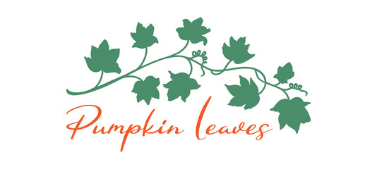 Pumpkin vines and leaves in fall halloween or autmn design border or underline element