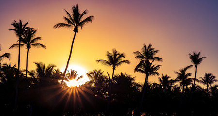 Palm trees silhouette at sunset on tropical island with sunrays