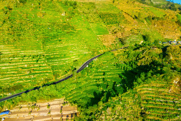 Road with farmland in Dieng plateau