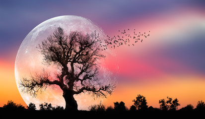 Obraz Silhouette of birds with lone tree in the background big full moon at amazing sunset