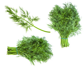 set from fresh green dill herb isolated on white