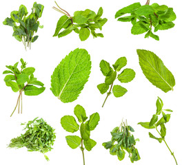 set from fresh green mint herbs isolated on white