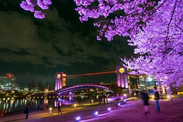 夜桜 富岩運河環水公園
