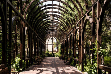 green leaves on trees and plants near metallic arch and walkway Fotomurales