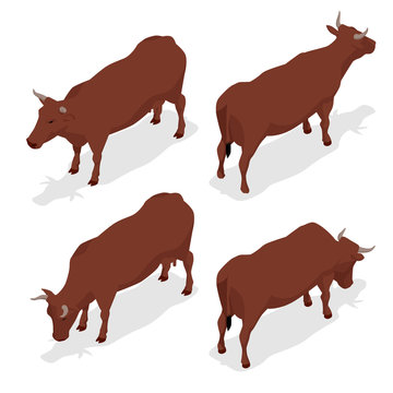 Isometric dairy cattle set. Cows collection. Isolated on white background.
