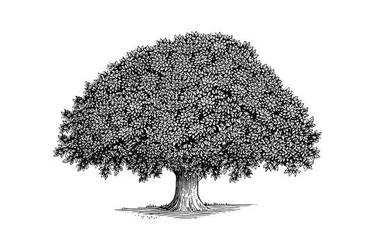 Illustration of a tree in a vintage style
