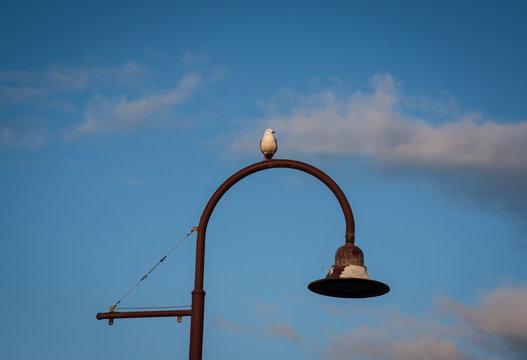 Seagull sitting on a lightpost